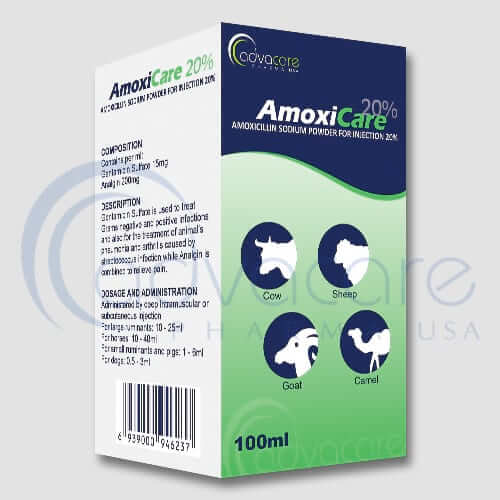 Amoxicillin Sodium Powder for Injection
